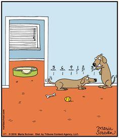 Dachshund Cartoons and Comics - funny pictures from CartoonStock Dachshund Breed, Dachshund Funny, Dachshund Art, Long Haired Dachshund, Funny Dogs, Funny Animals, Cute Animals, Daschund, Dapple Dachshund