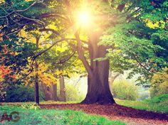 Fototapeta papírová AG Design Listnatý strom FTXXL-1464, rozměry 360 x 270 cm   Ochrana tapet a fototapet Kid Spaces, Plants, Inspiration, Collection, Design, Mj, Classroom, Organization, Children