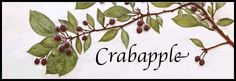 Custom Crabapple wall tiles by Stillwater Porcelain. Realistic plants in relief, actual crabapple branches used to create molds. Hand-painted.