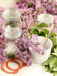Almond Corner: Lilac Jelly