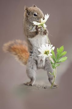 Squirrel and flower by Andre Villeneuve on 500px
