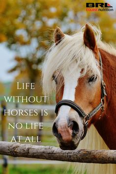 Now this I can relate to! What on earth would fill us horse people's time if we didn't have horses??? live without horses is no life at all. inspirational equestrian horse quote #BRLequinenutrition #BRLequine #loveyourhorse