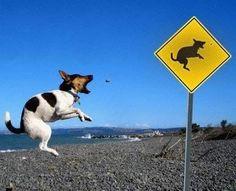 Galeria de Fotos: Cachorros Voadores - Chongas
