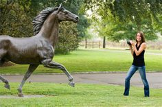How to Open a Horse Boarding Stable