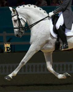 Dressage:) nice, but his nose is just a tad behind the vertical.