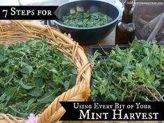 7 Steps for Using Every Bit of Your Mint Harvest, by The Mind to Homestead