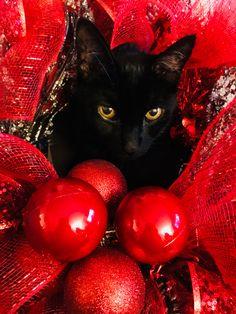 I'm a pretty Christmas Kitty!