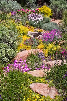 Charles Mann made a small but colorful rock garden in Santa Fe New Mexico which blooms in late May with dianthus sedums cacti sunrose and a number of other native and non-native shrubs and plants including Caryopteris Salvia and Ephedra. Rock Garden Plants, Garden Shrubs, Rockery Garden, Garden Path, Terrace Garden, Herb Garden, Santa Fe, Most Beautiful Gardens, Amazing Gardens