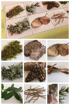Metsämörri etsi retki metsä luonto How To Dry Basil, Herbs, Green, Montessori, Science, School, Robin Hoods, Herb, Schools