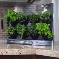 Verticle Herb Garden, Vertical Succulent Gardens, Diy Herb Garden, Wall Herb Garden Indoor, Garden Paths, Mason Jar Herb Garden, Herb Garden In Kitchen, Kitchen Plants, Kitchen Gardening