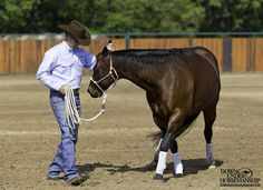 Groundwork Exercise Flex & Lead By the Ear Goal: To have the horse immediat. Horse Barns, My Horse, Horse Love, Horse Stalls, Horse Riding Tips, Horse Tips, Horse Training, Training Tips, Horse Saddles
