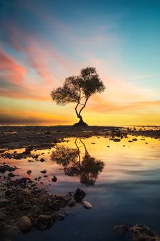 Tree of Life by Stijn Dijkstra on 500px