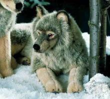 Kosen's fabulous lying Wolf. A luxurious cuddly soft toy.