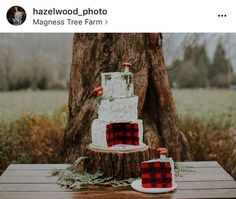 Wedding cake- outside looks like a birch tree, inside is red and black checkered plaid