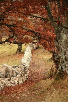 Autumn love. . . .