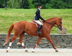 Putting a Horse on the Bit | Anna Mullin