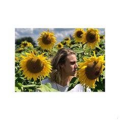Stop 'n bietjie en ruik die blomme 🍃🌿🌻 Elandré Dandelion, Flowers, Plants, Dandelions, Plant, Taraxacum Officinale, Royal Icing Flowers, Flower, Florals