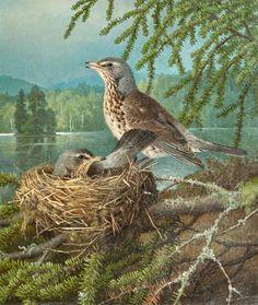 Ferdinand von Wright (1822-1906) - Fieldfares on the nest, oil on canvas, 36 x 31,5 cm.