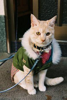 such a stylish kitty. (winter clothing by nekojimakeibu, via Flickr)