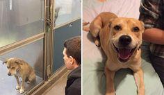 Prima e dopo l'adozione: gli animali ritrovano la felicità