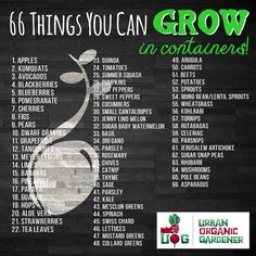 66 things you can grow in containers! - 66 things you can grow in containers! 66 things you can grow in containers! 66 things you can grow - Indoor Vegetable Gardening, Organic Gardening Tips, Urban Gardening, Gardening Hacks, Gardening Courses, Balcony Gardening, Porch Garden, Gardening Supplies, Urban Farming