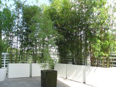Outdoor Bamboo and many styles of modern planters in fiberglass, fiberclay and glazed ceramic clay pottery.....