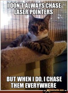 The Most Interesting Cat In The World - I don't always chase laser pointers