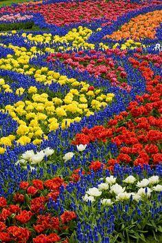 Links to a photo site with dozens of beautiful flowers ~ 11977 - ID: 6118403 © Jim  Zuckerman