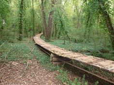 Knoxville Urban Wilderness Trail System - South Loop Mountain Bike Ride