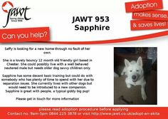 Do you have room for a little jewel to add sparkle to your life? Japanese Akita, Can You Help, Jewel, Trust, Sparkle, Room, Life, Bedroom, Gem