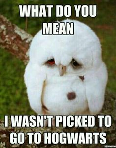 Funny pictures about Sad Baby Owl. Oh, and cool pics about Sad Baby Owl. Also, Sad Baby Owl. Funny Animal Quotes, Funny Animal Pictures, Baby Pictures, Funny Photos, Meme Pics, Animal Humor, Funny Cute, The Funny, Super Funny