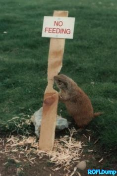 I don't like this sign. I must be fed!