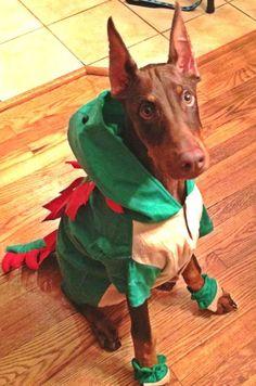 Am I the cutest dragon evvvvvver? Doberman Colors, Doberman Love, Big Dogs, Cute Dogs, Black Lab Puppies, Corgi Puppies, Cute Dog Costumes, Baby Animals, Cute Animals