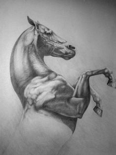 How To Draw A Horse – Video