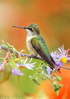 Ruby Throated Hummingbird by Andres Cadena on 500px