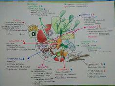 Mapa Mental lipídios, vitaminas e proteínas.
