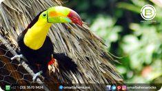 Joyas de la naturaleza. #fotografiademascotas #fotografoenguadalajara #fotografoenqueretaro