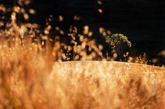 7 zile în Toscana – mai mult decât simplă o călătorie – The True Treasures Golden Tree, Toscana, Mai, Travel Photography, Leaves, Italy, Instagram, Italia, Travel Photos