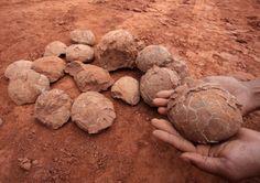 Fossili di uova di dinosauro.