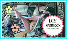 ~~~~Put Me in GLORIOUS HD!~~~ Hey Guys! Today I am going to show you how to sew a hammock for you pet rat, chinchilla, ferret, or any other small animal. I a...