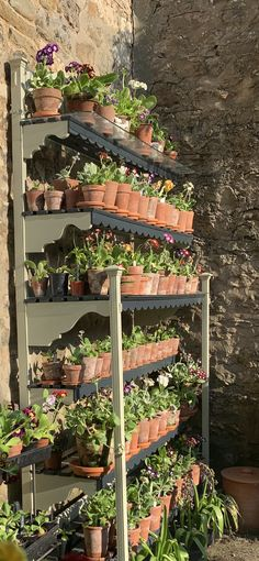 Garden Inspiration, Garden Ideas, Primula Auricula, Theatres, Terracotta Pots, Back Gardens, Projects To Try, Outdoor Structures, Display