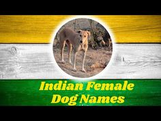 YouTube Cute Puppy Names, Cute Names For Dogs, Best Dog Names, Cool Names, Best Dogs, Cute Puppies, Cute Dogs, Girl Dog Names Unique, Female Dog Names