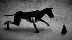 Był sobie król. Była sobie Maria Peszek Cool Animations, Moose Art, Horses, Dogs, Pet Dogs, Horse, Doggies, Words, Dog
