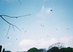   写ルンです   instagram   Kunihito Miki Photography  