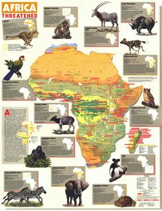Africa: Map of Threatened Species African Map, African American History, National Geographic Maps, All About Africa, National Parks Map, World Geography, Lovely Creatures, African Countries, Historical Maps