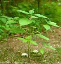 planten Herbs, Herb, Medicinal Plants