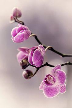 Orchidea by Kasia MYCATHERINA Pietraszko