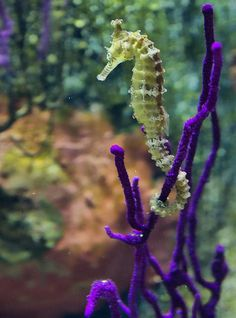 Seahorse by Jim Boots – Amazing Pictures - Amazing Travel Pictures with Maps for All Around the World