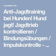 Anti-Jagdtraining bei Hunden! Hund jagt! Jagdtrieb kontrollieren / Bindungsübungen / Impulskontrolle - YouTube