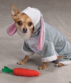 Bunny Dog is Not Happy http://ift.tt/24hSqnT